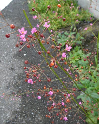 flower_pink_03