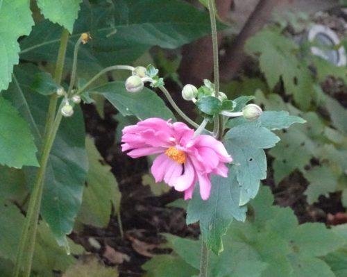 flower_pink_04
