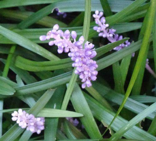 flower_purple_06